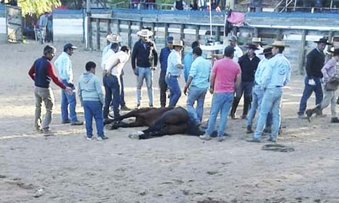 Caballo muere en domadura de Pumanque