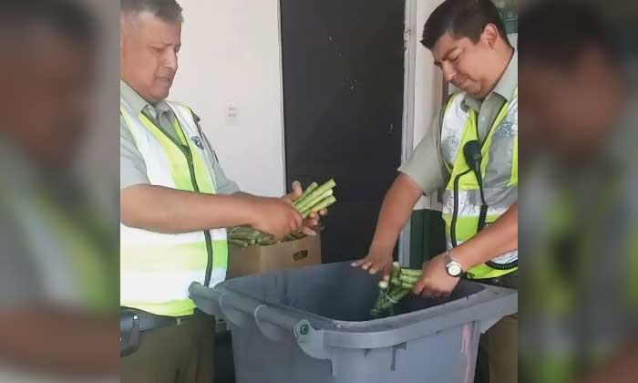 Destrucción de espárragos por Carabineros fue ilegal