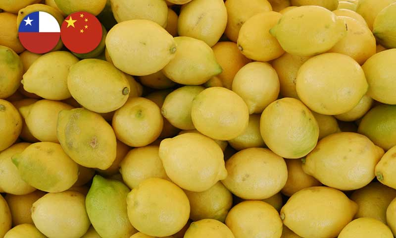 citricos chile china