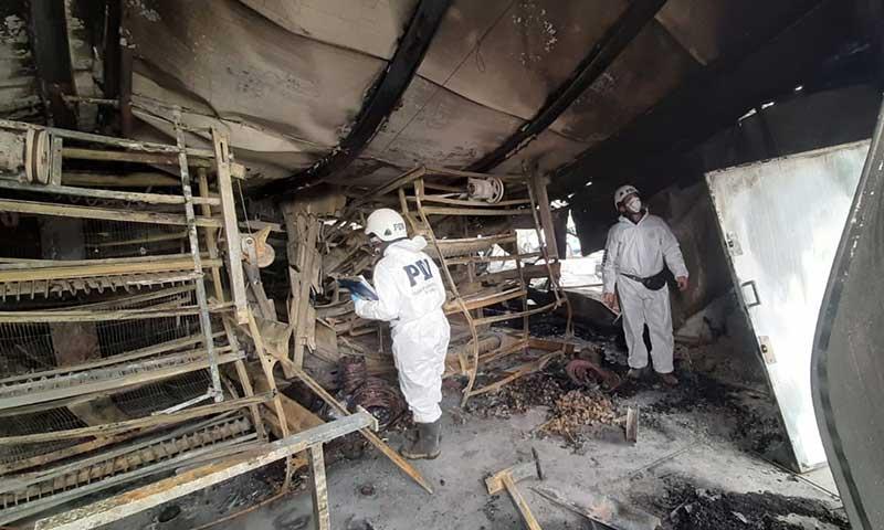 Incendio que afectó a empresa avícola en Palmilla