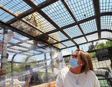 Parque Safari de Rancagua abre sus puertas tras cerca de 7 meses cerrado